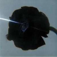 Pablo's Eye – Dark Matter - STROOM