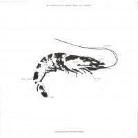 Ebi – Space Teddy EP 2 - Transmigration